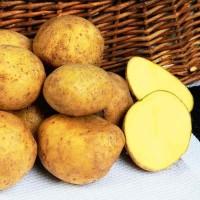 Картофель семенной Адретта