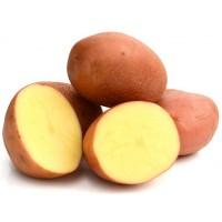 Картофель семенной Ароза