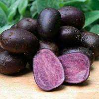 Картофель семенной Гжель
