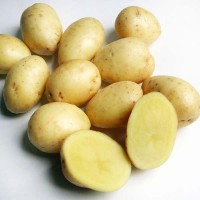 Картофель семенной Кемеровчанин