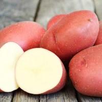 Картофель семенной Любава