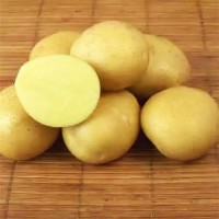 Картофель семенной Метеор