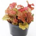 Мы рассылаем молодые растения в контейнере