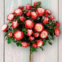 Роза чайно-гибридная Ностальжи (на штамбе)