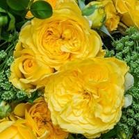 Розы флорибунда (Imperial Rose)